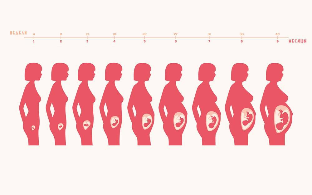 Когда начинает расти живот при беременности | pampers ru