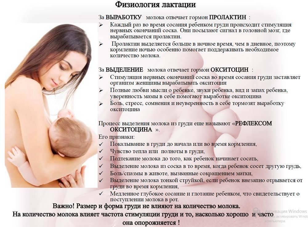 Женская репродуктивная система: лактация