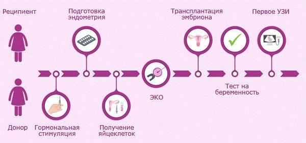 Эко с пгд эмбриона (преимплантационная генетическая диагностика) в клинике «линия жизни» | стоимость пгд диагностики при эко в москве в 2021 году