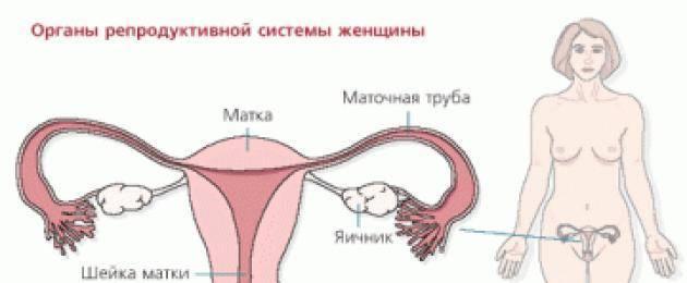 Пульсация яичника