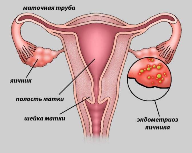 Признаки беременности: классификация и диагностика