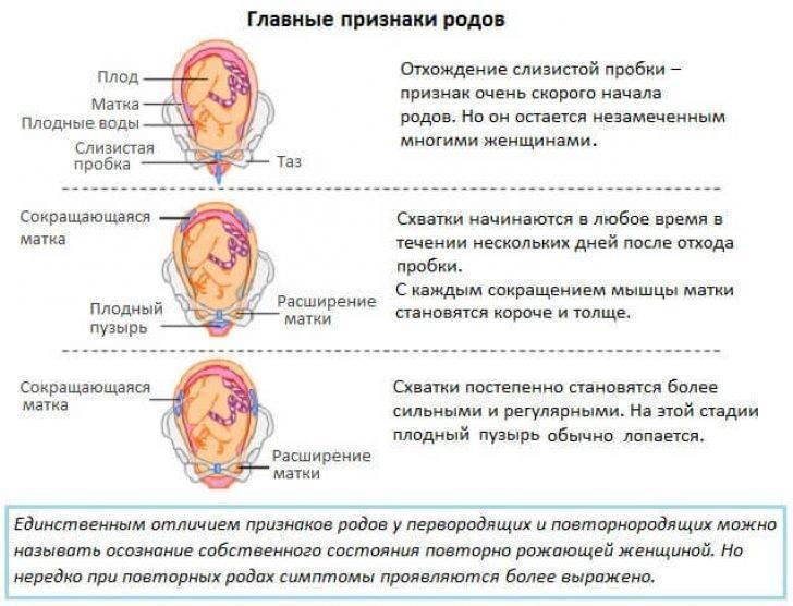 Слизистая пробка при беременности: что это, как отходит и через сколько начинаются роды