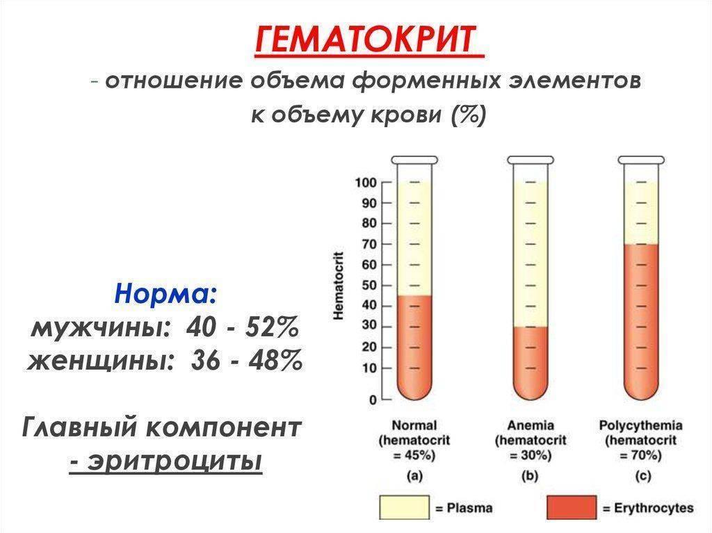 Гематокрит понижен у ребенка: что это значит? симптомы и лечение - kardiobit.ru