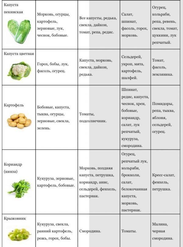 Соленые огурцы аллергенный продукт