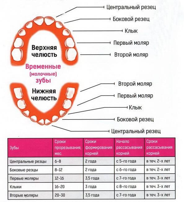 Почему выпадают зубы у взрослого человека? - стоматологическая клиника элитдентал м