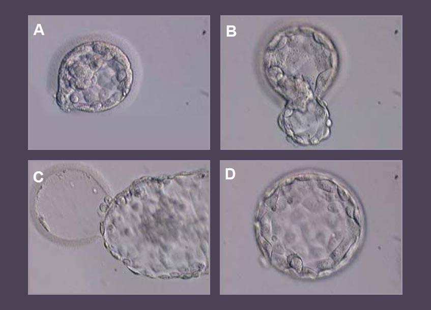 Криоконсервирование эмбрионов