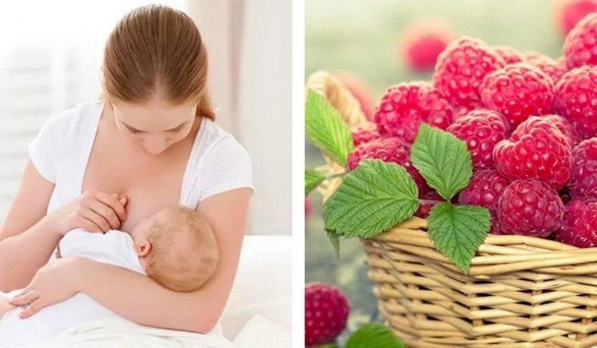 Малина при грудном вскармливании – польза для женщин. можно ли малину кормящей маме?