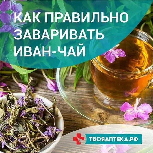 Иван-чай при грудном вскармливании: можно ли пить, свойства, как заваривать