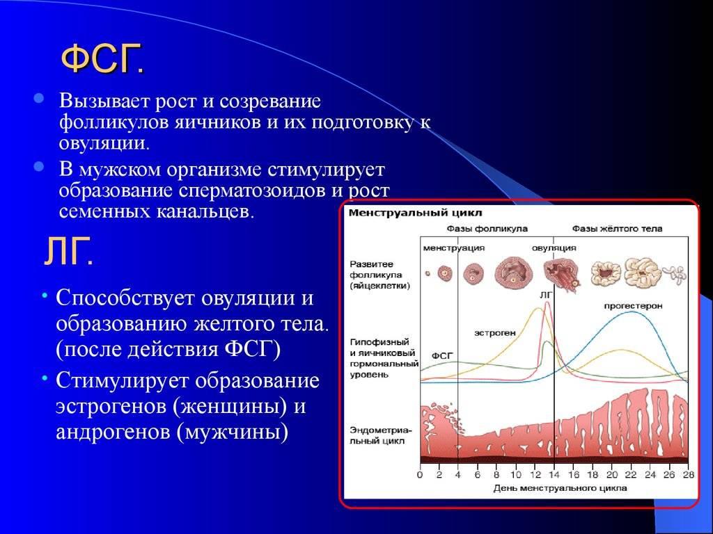 Лютеинизирующий гормон – норма, лг повышен, понижен, лг пролактин | лютеиновая фаза прогестерона