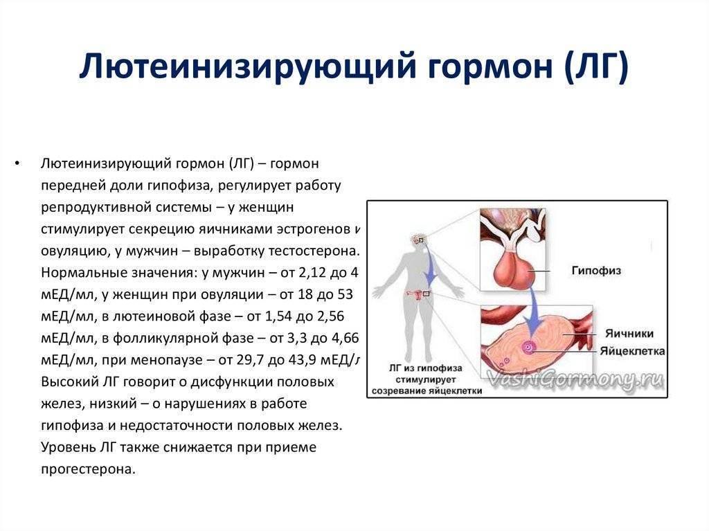 Гормоны лг и фсг: роль в организме женщины