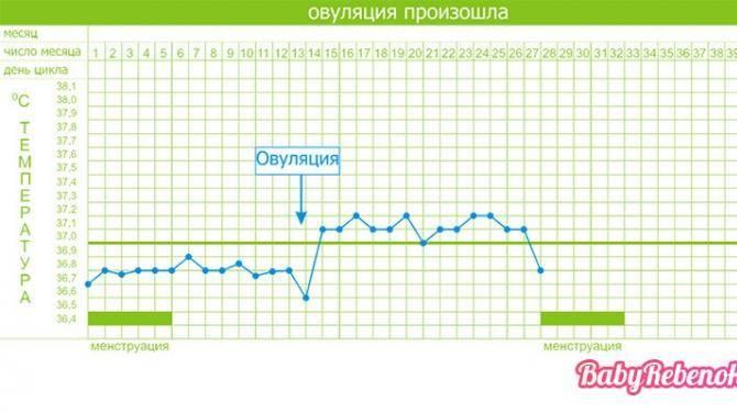 Как мерить базальную температуру для определения беременности
