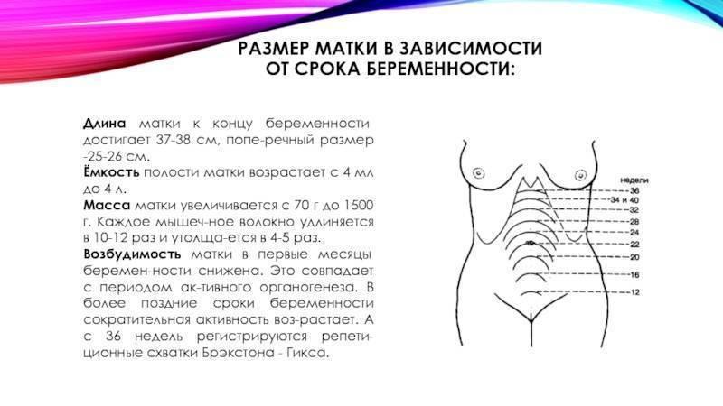 Как по шейке матки определить день овуляции и наступление беременности? осмотр и ощупывание шейки матки. шейка матки до, во время овуляции и после. шейка матки до задержки месячных при беременности