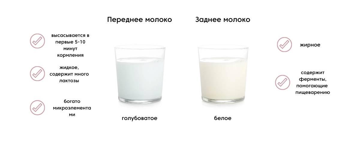 Переднее и заднее молоко: чем отличается, как выглядит
