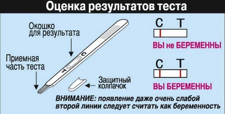 Как делать тест на беременность - инструкции по типам тестов