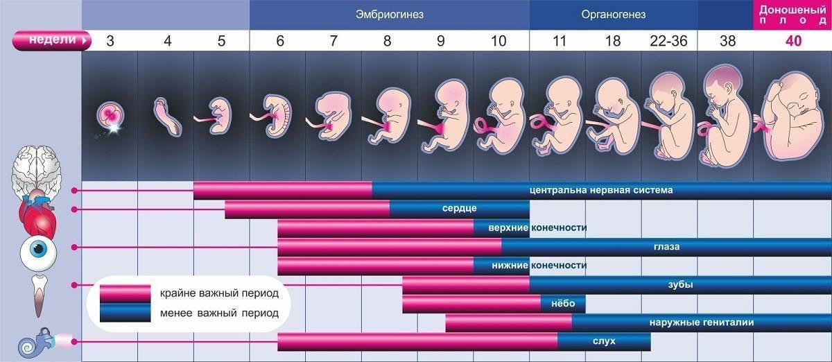 Второй месяц беременности - признаки, ощущения, анализы, развитие плода