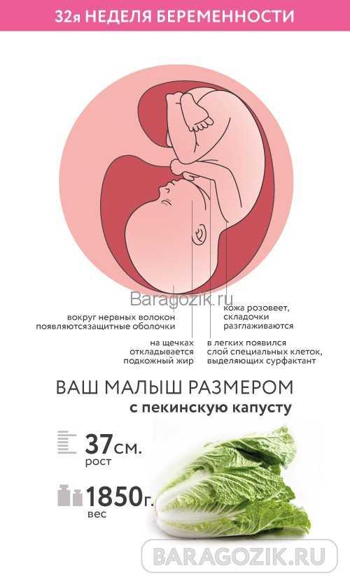 32 неделя беременности – это сколько месяцев, что происходит с малышом, мамой? вес ребенка в 32 недели беременности