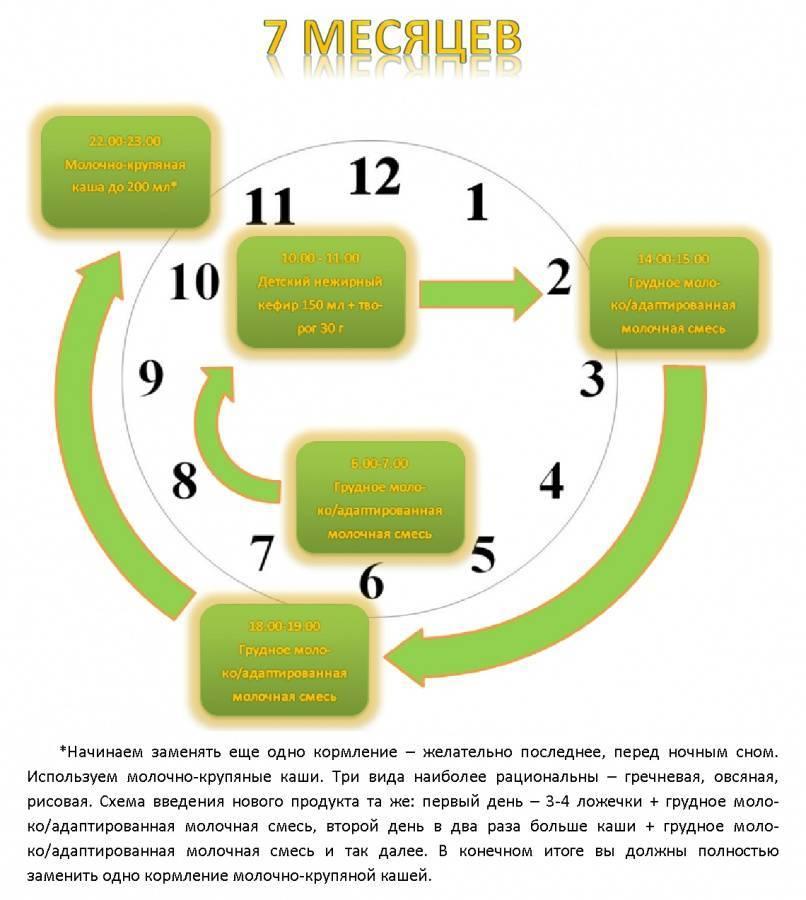 Педагогический прикорм при грудном вскармливании: педприкорм (Комаровский)