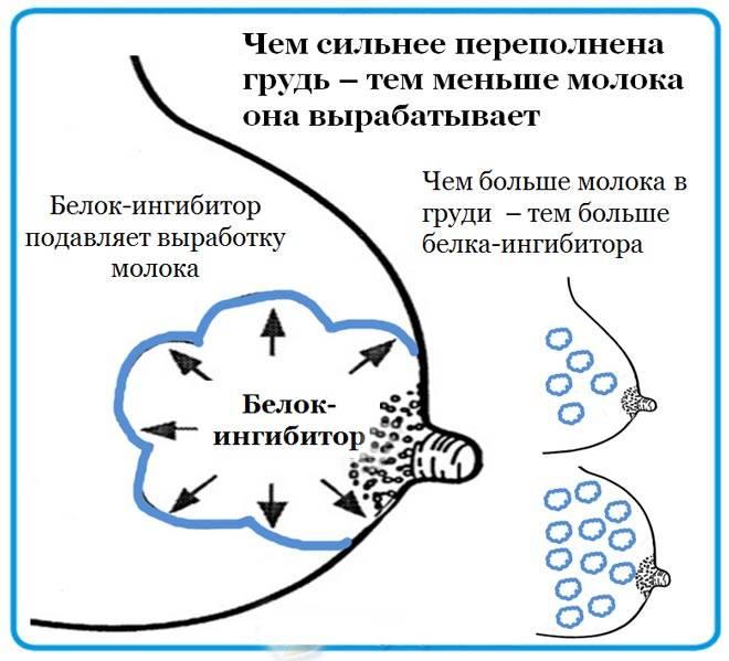Акев - консультанты по грудному вскармливанию - стимулирующее сцеживание для увеличения выработки молока. полное руководство