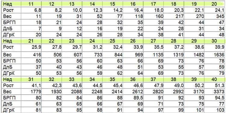 Таблица длины бедренной кости плода по неделям. какая норма?