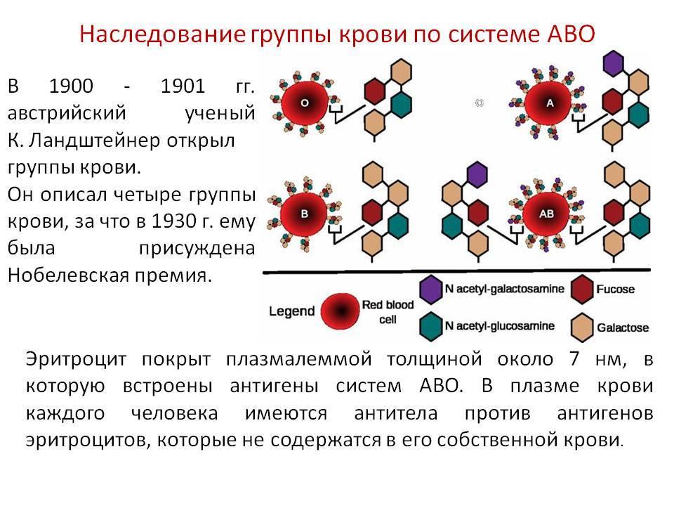 Чья группа крови передается ребенку при рождении или как наследуется резус-фактор: какой должен быть у детей, от чего зависит, передается ли по наследству stomatvrn.ru