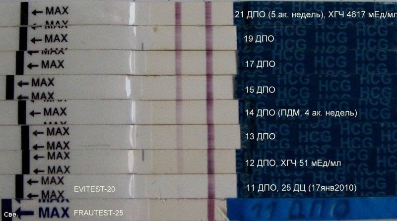 На каком сроке анализ на хгч покажет беременность?