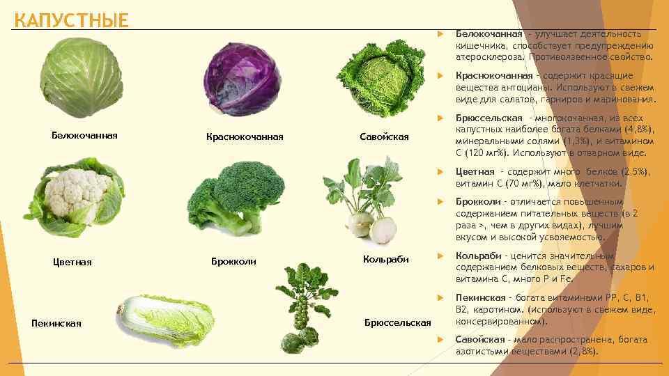Цветная капуста при грудном вскармливании: можно ли кормящей маме есть овощ, в том числе в первый месяц, а также польза и рецепты