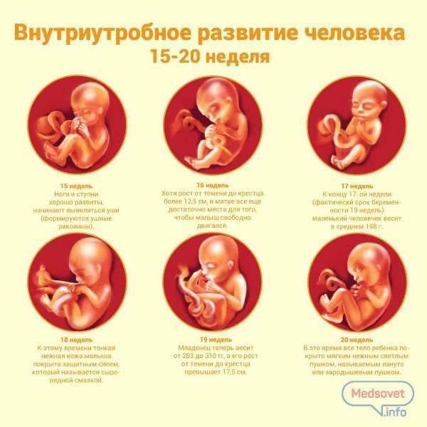 Можно ли наклоняться при беременности
