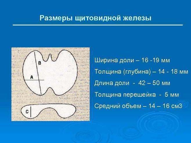 Гормоны щитовидной железы – норма у женщин, мужчин и детей. таблица. как привести гормоны щитовидки в норму   ооо «амадей клиник»