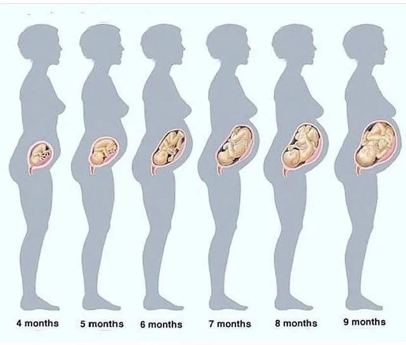 Шестой месяц беременности   | материнство - беременность, роды, питание, воспитание