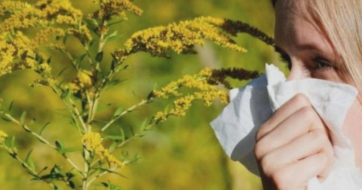 Аллергия на березу. симптомы, причины и лечение аллергии на березу у детей