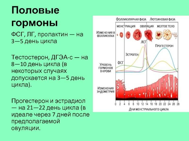 Оценка гормонального статуса. анализы на гормоны