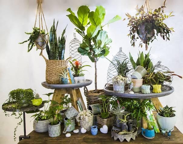 Цветы в комнате для детей: какие растения можно расположить в детской, а которые категорически нельзя