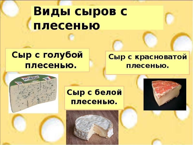 Сыр во время беременности. можно ли есть сыры будущей матери? - диетология