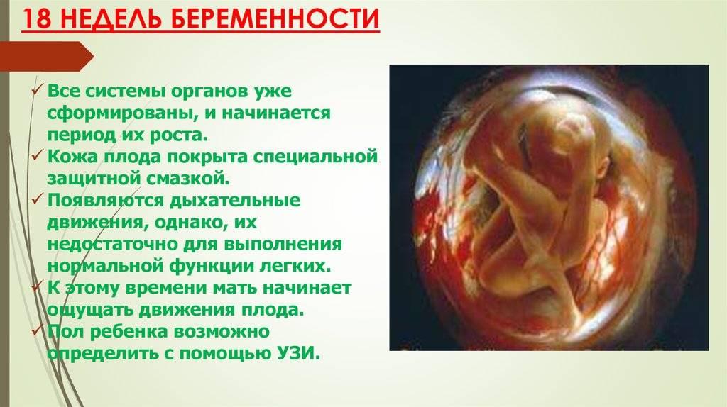Календарь беременности. 19-я акушерская неделя
