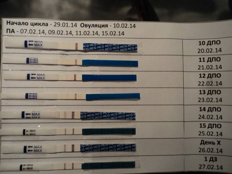 С какого дня после зачатия покажет анализ крови на хгч