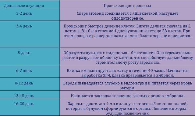Первые признаки беременности (14 вариантов)
