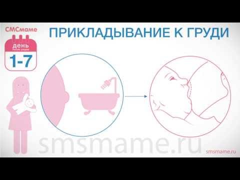 Правильное прикладывание к груди: техника, советы, фото и видео