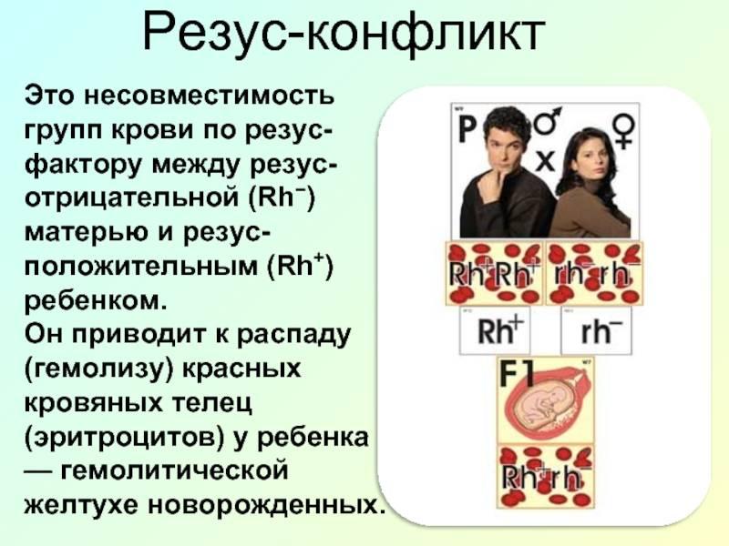 Резус при беременности. резус-конфликт. отрицательный резус-фактор во время беременности.