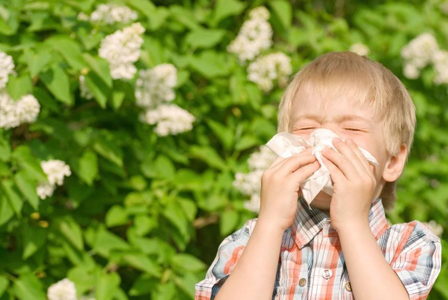 Аллергия на пыльцу (сенная лихорадка) – симптомы, лечение, советы