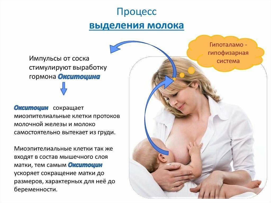 Как улучшить лактацию молока у кормящей мамы