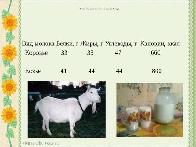 Козье молоко — чем полезно для взрослых и детей, при каких заболеваниях можно пить