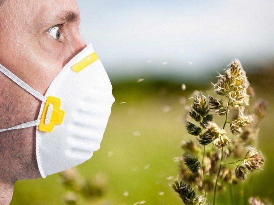 Аллергия на пыльцу травы является наиболее распространенной аллергией