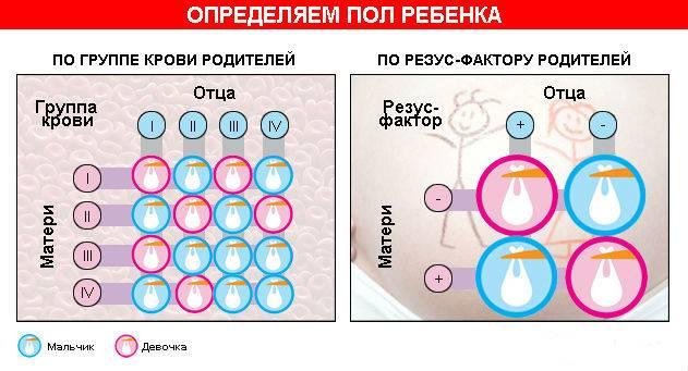 Пол ребенка по группе крови родителей - как рассчитать по таблице и когда сдать анализ?