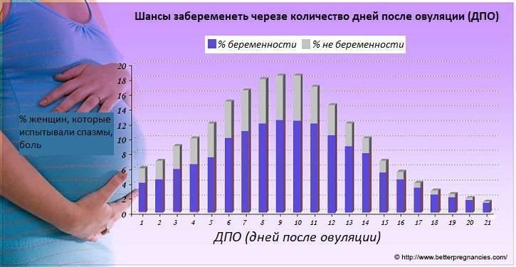 Вероятность беременности после эко