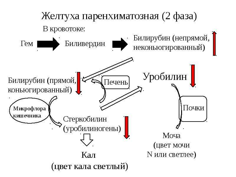 Билирубин и его фракции (общий, прямой, непрямой): исследования в лаборатории kdlmed