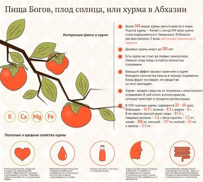 Можно ли давать ребенку хурму до 3 лет: оптимальный возраст для знакомства с фруктом, его польза и вред
