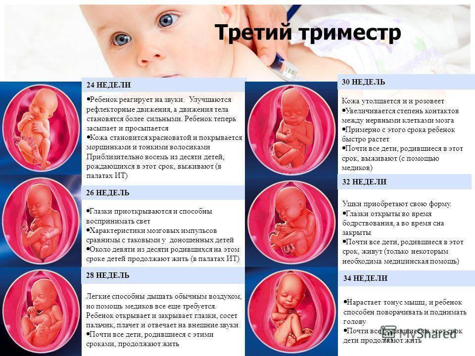С какой недели начинается 3 триместр беременности и когда делают УЗИ: особенности периода