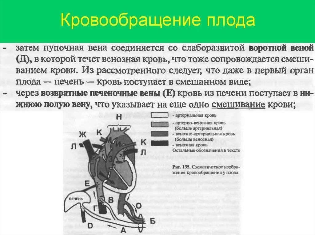 Гемодинамика — большая медицинская энциклопедия