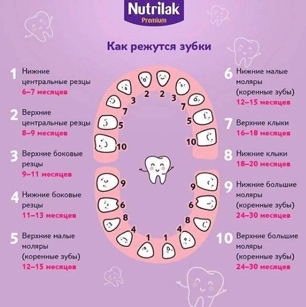 Порядок прорезывания зубов у детей: схема прорезывания молочных и постоянных зубов