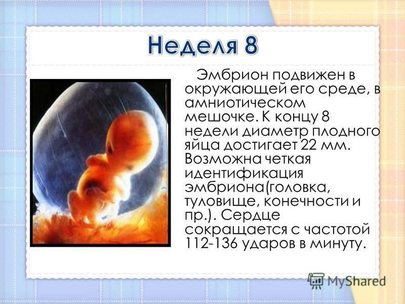 Что происходит на десятой неделе беременности